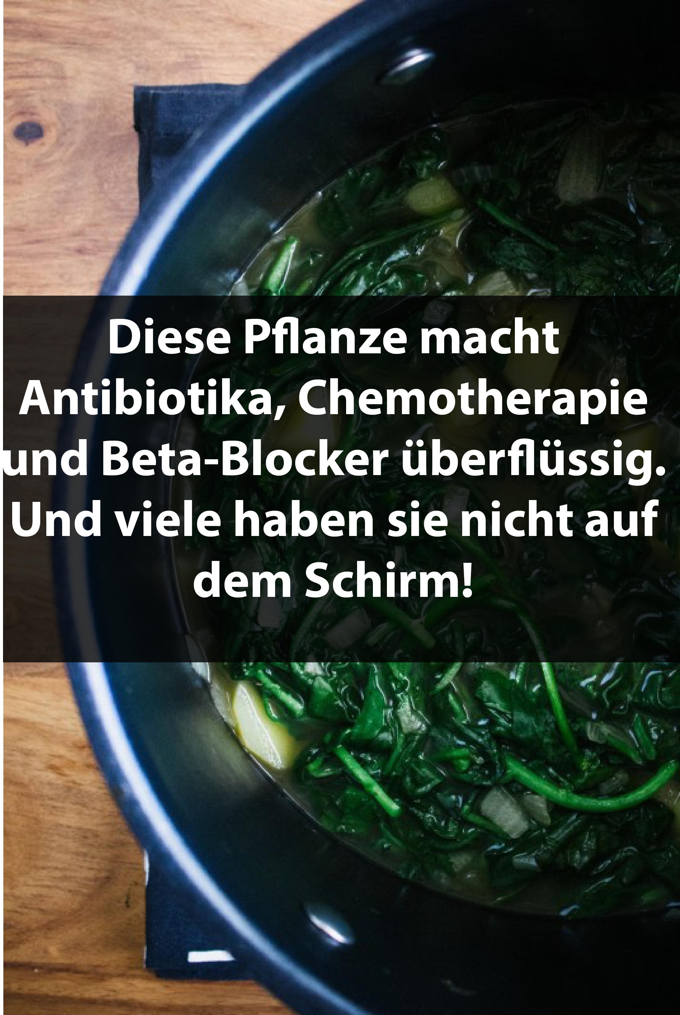 Diese Pflanze macht Antibiotika, Chemotherapie und Beta-Blocker überflüssig. Und viele haben sie nicht auf dem Schirm!