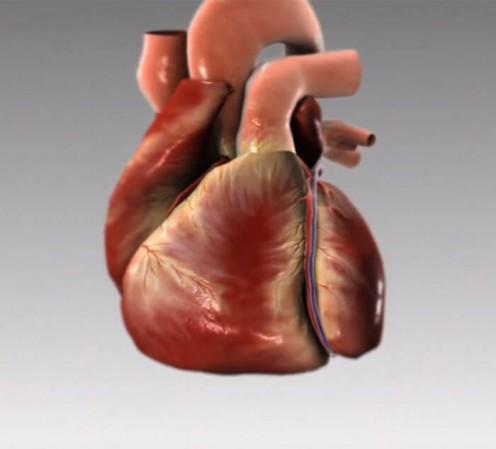 Dein Körper warnt dich SO einen Monat vor einem Herzinfarkt.