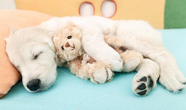 Dieses selbstgemachte natürliche Schlafpuder hilft dir beim Einschlafen