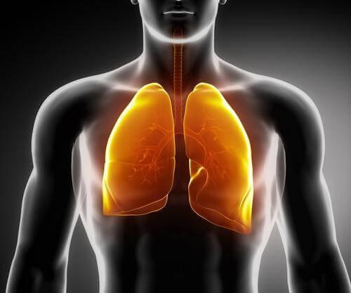 lungen-reinigen