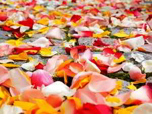 Wellness mit Rosenblättern