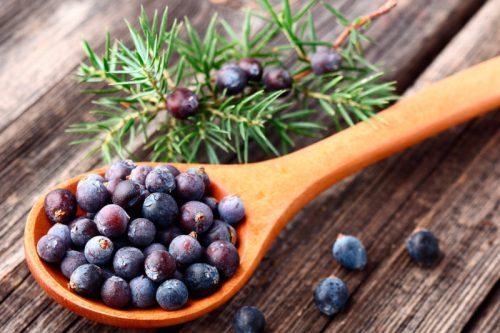 8 gesunde Kräuter, die Ihre Diät unterstützen, um Gewicht zu verlieren