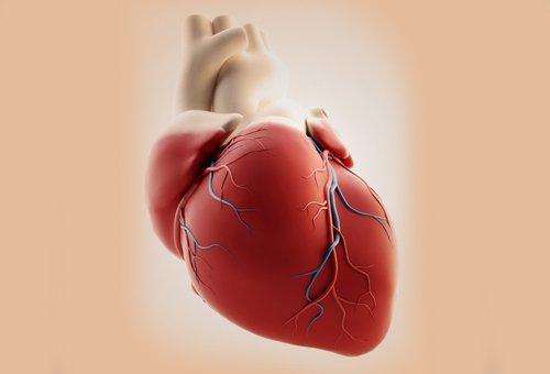 Symptome der wichtigsten Herzerkrankungen bei Frauen