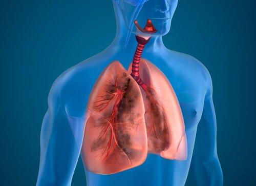 Was sind die Gewichte und Maße der Organe?