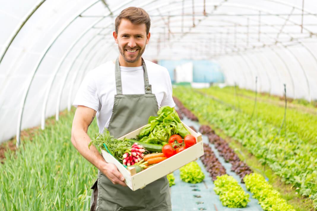 Gewächshaus Gemüse